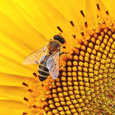 dispensador de miel de abejas