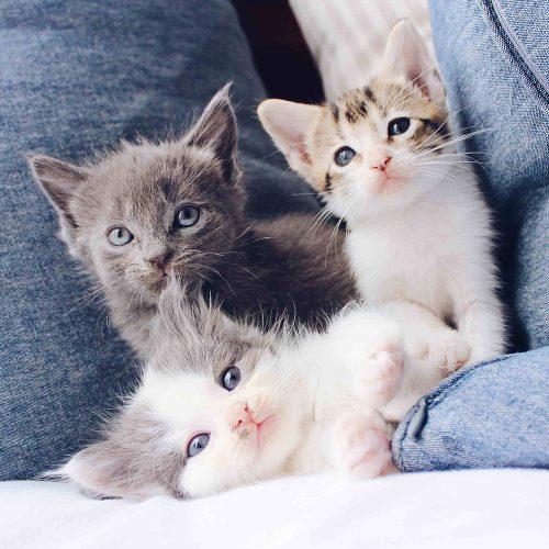 dispensador comida para gatos